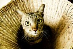 Gatito lindo en la cesta Fotografía de archivo
