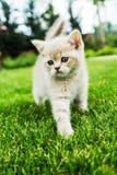 Gatito lindo en la hierba verde Foto de archivo