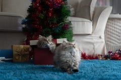Gatito lindo en la Navidad fotografía de archivo