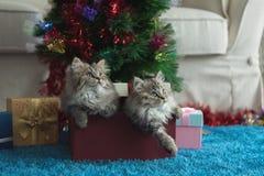 Gatito lindo en la Navidad imagen de archivo