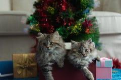 Gatito lindo en la Navidad imagen de archivo libre de regalías
