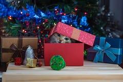 Gatito lindo en la Navidad fotografía de archivo libre de regalías
