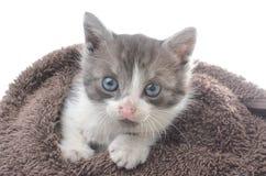 Gatito lindo en toalla marrón Fotografía de archivo libre de regalías