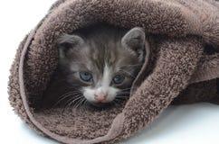 Gatito lindo en toalla marrón Imagen de archivo libre de regalías