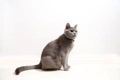 Gatito lindo en un fondo blanco Fotografía de archivo