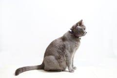 Gatito lindo en un fondo blanco Imagenes de archivo