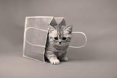 Gatito lindo en un panier, foto blanco y negro Foto de archivo libre de regalías