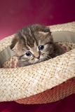 Gatito lindo en un sombrero Imagen de archivo