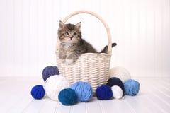 Gatito lindo en una cesta con hilado en blanco Imagenes de archivo