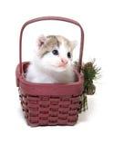 Gatito lindo en una pequeña cesta imagen de archivo libre de regalías
