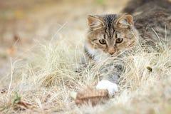 Gatito lindo Iraheta en la hierba del otoño Imagenes de archivo