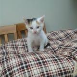 Gatito lindo minúsculo fotografía de archivo