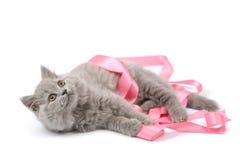 Gatito lindo que juega con la cinta rosada aislada Imagenes de archivo