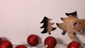Gatito lindo que juega en la determinación de las decoraciones de la Navidad almacen de video