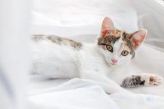 Gatito lindo que miente en alféizar en una Tulle blanca brillante Fotografía de archivo