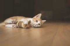 Gatito lindo que se acuesta en piso de madera imagen de archivo
