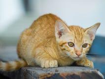Gatito lindo que se sienta para mirar cuidadosamente Fotografía de archivo libre de regalías