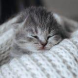 Gatito lindo recién nacido que duerme en una bufanda caliente de las lanas, manta Peque?o gato el dormir Reclinación gris rayada  fotografía de archivo libre de regalías