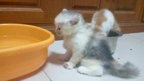 Gatito, 2 meses metrajes