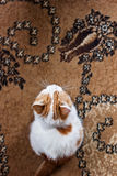 Gatito mezclado de la raza Imágenes de archivo libres de regalías