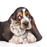 Gatito minúsculo del abarcamiento del perrito del perro de afloramiento Aislado en blanco Fotografía de archivo