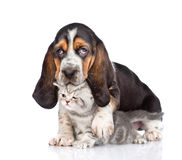 Gatito minúsculo del abarcamiento del perrito del perro de afloramiento Aislado en blanco Foto de archivo libre de regalías