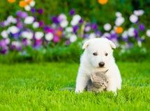 Gatito minúsculo del abarcamiento del perrito en hierba verde Fotografía de archivo