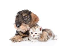 Gatito minúsculo del abarcamiento del perrito Aislado en el fondo blanco Imagen de archivo libre de regalías