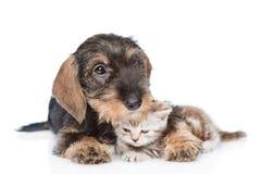 Gatito minúsculo del abarcamiento del perrito Aislado en el fondo blanco Fotos de archivo