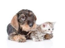 Gatito minúsculo del abarcamiento del perrito Aislado en el fondo blanco Fotografía de archivo libre de regalías