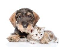 Gatito minúsculo del abarcamiento del perro Aislado en el fondo blanco Imagen de archivo