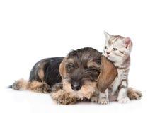 Gatito minúsculo del abarcamiento del perro Aislado en el fondo blanco Imágenes de archivo libres de regalías