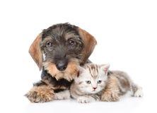 Gatito minúsculo del abarcamiento del perro En el fondo blanco Imagenes de archivo