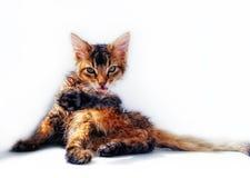 Gatito mojado Imagenes de archivo