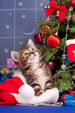 Gatito mullido Fotos de archivo