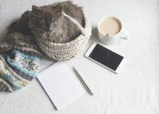 Gatito mullido gris en una cesta, taza de café y un teléfono en una superficie blanca Foto de archivo libre de regalías