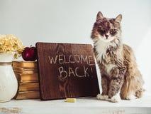 Gatito mullido, libros del vintage, manzana roja y pizarra del marrón Foto de archivo
