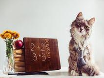 Gatito mullido, libros del vintage, manzana roja y pizarra del marrón Imagen de archivo