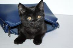 Gatito muy hermoso Una mirada mágica Gato en el bolso imagenes de archivo
