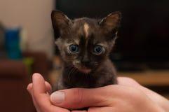 Gatito negro Imagen de archivo