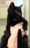 Gatito negro imagen de archivo libre de regalías
