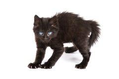 Gatito negro asustado que se coloca en un fondo blanco imagen de archivo