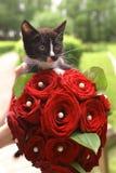 Gatito negro con el ramo nupcial de la rosa del rojo Fotos de archivo