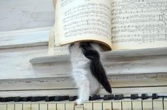 Gatito negro con las rayas blancas imagen de archivo