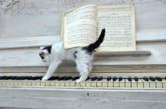 Gatito negro con las rayas blancas foto de archivo libre de regalías