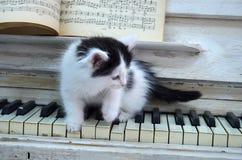 Gatito negro con las rayas blancas fotografía de archivo