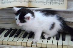 Gatito negro con las rayas blancas fotos de archivo libres de regalías