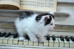 Gatito negro con las rayas blancas imagen de archivo libre de regalías