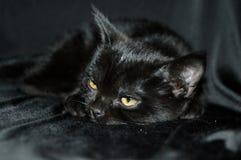 Gatito negro con los ojos amarillos Gato Imagen de archivo