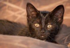Gatito negro disimulado listo para saltar fotografía de archivo